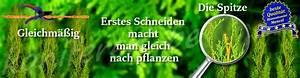 Wann Thuja Schneiden : wann pflanzt man thuja ~ Markanthonyermac.com Haus und Dekorationen
