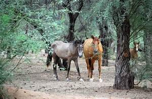 Brenda's Arizona: The wild horses  Wild