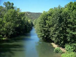Tree Lined River