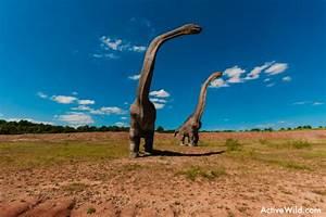 Day 6 Mesozoic Animals That Are Not Dinosaurs David Bird