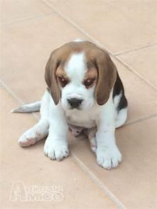 regalo cani terni