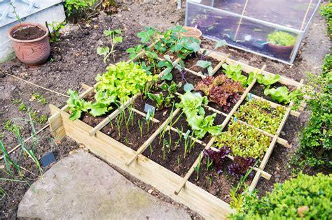 easy vegetable garden ideas  beginners ebay