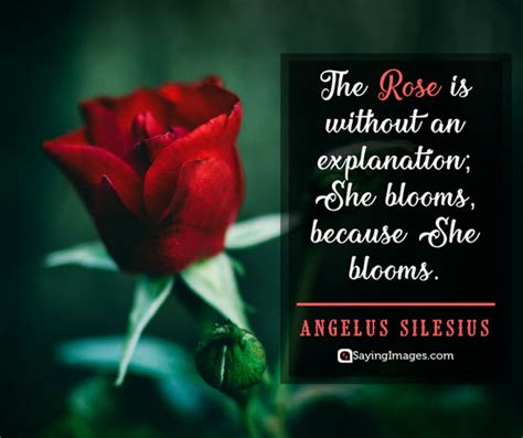 roses quotes thatll change    view life