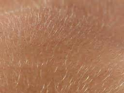 Vellus hair: Function and growth