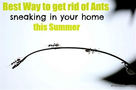 best way to get rid of ants traffic jam weekend linky party 51 giveaway and features