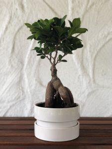 ikea bonsai pflege bonsai buch zubehoer werkzeug