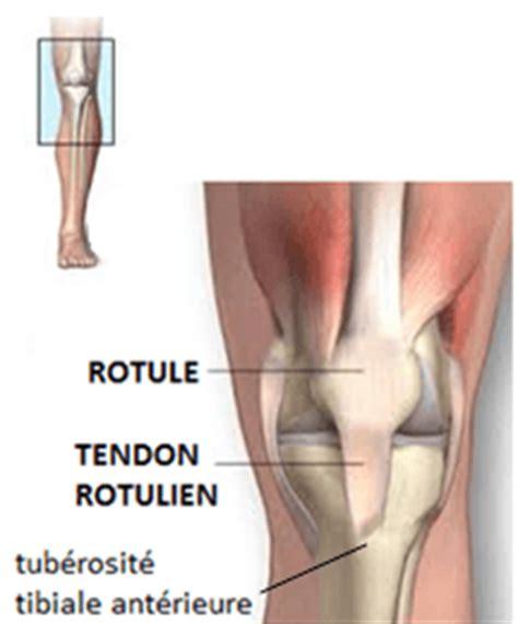 une tendinite du tendon rotulien physioth 233 rapie forcemedic