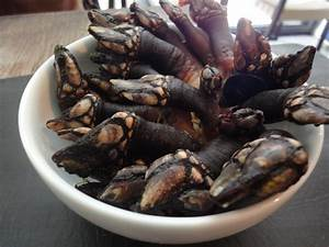 Pousse Pieds……Gooseneck Barnacles | French For A While!