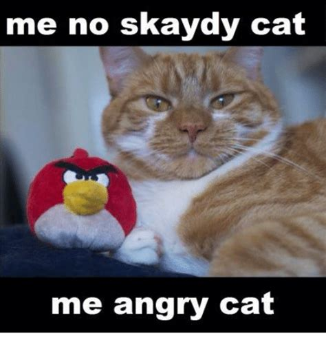 Meme Angry Cat - angry cat meme 2018 funny cats