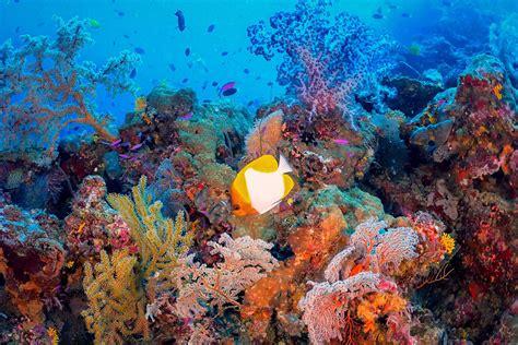diveplanit dive travel  personal diving travel agent