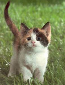 Funny Animals Zone: Really Cute Cats and Kittens