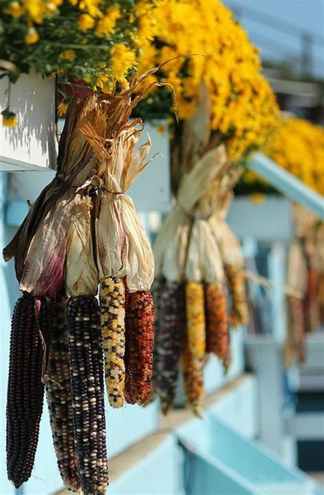 where to buy corn stalks for decorating fall decorating bring the outside inside this season