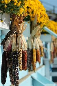fall decorating bring the outside inside this season