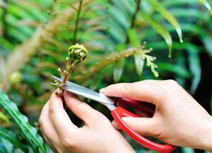 Plant Harvesting From Wild