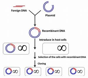 Construction And Cloning Of Recombinant Dna Molecules
