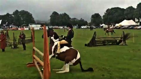 horse his smart