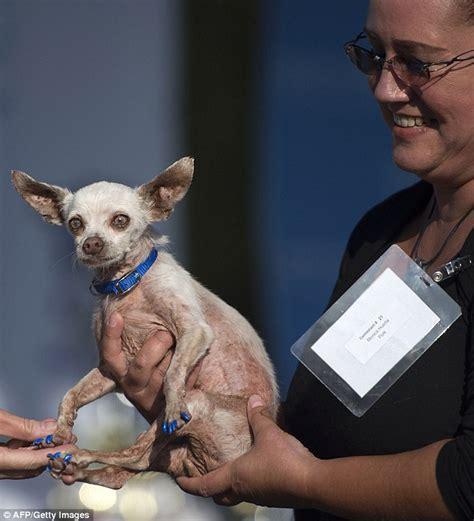 hunchbacked pooch quasi modo wins worlds ugliest dog