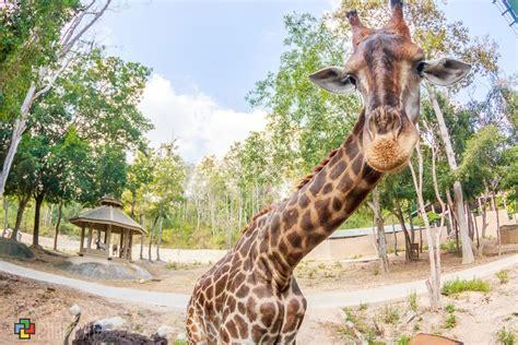 เที่ยวสวนสัตว์เชียงใหม่ - ที่เที่ยวบล็อก