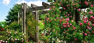 Plante Grimpante Pergola : plantes grimpantes pergola quelle pergola pour les plantes grimpantes ~ Nature-et-papiers.com Idées de Décoration