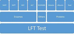 Liver Function Test  Lft Test   Cost  Normal Values