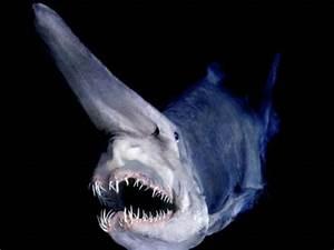 Remarkably bizarre deep sea creatures - not a freak show
