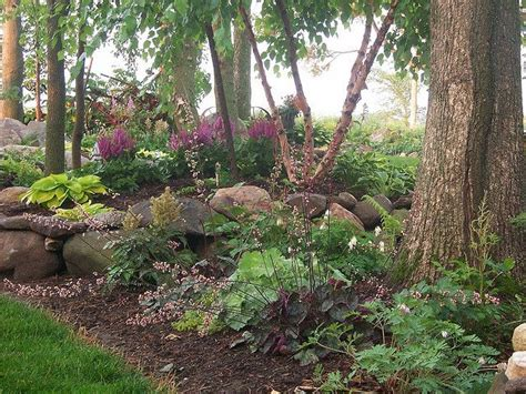 wooded garden wooded part of the yard landscaping pinterest