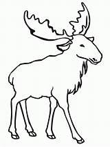 Elk Coloring Moose Pages Outline Drawing Animal Bull Printable Clip Deer Draw Simple Cliparts Template Easy Silhouette Getdrawings Head Para sketch template