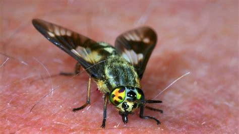 Welche Insekten Beißen by Welche Insekten Dich Stechen K 246 Nnen Und Wie Du Stiche