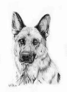 Learn To Draw A German Shepherd Puppy Dog Step By Step