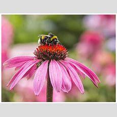 Genuß Pur Foto & Bild Naturkreativ