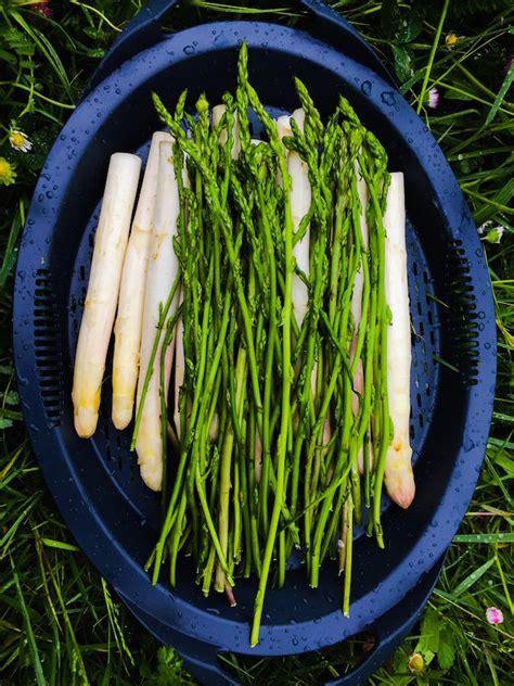 cuisine vapeur recettes loulougourmet l 39 asperge des bois