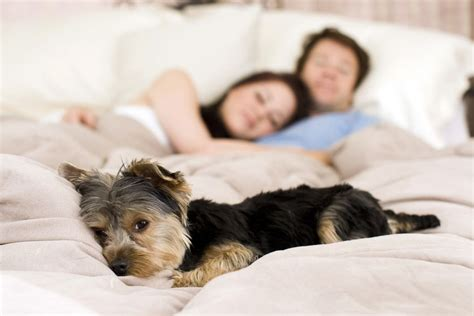 9 Tips For Sleeping Soundly With A Dog In The Bed