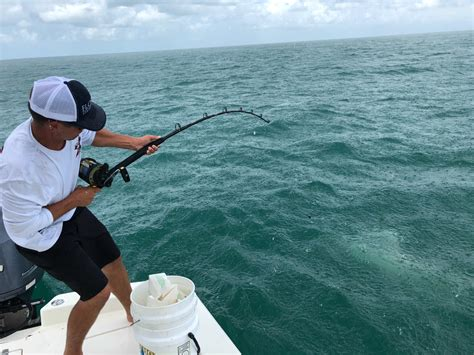grouper shark fishing vs gulf everglades company showdown eating florida gun