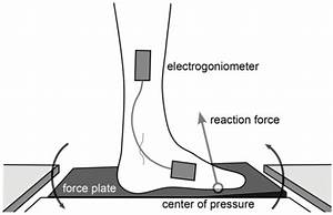 Diagram Of Robotic Force Plate Dorsiflexing The Stance