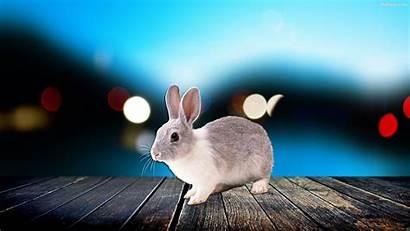 Rabbit Wallpapers Desktop Backgrounds Background Baltana