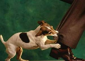 Yau Law Firm » Dog Bite Injuries In Florida – Part I: Good ...