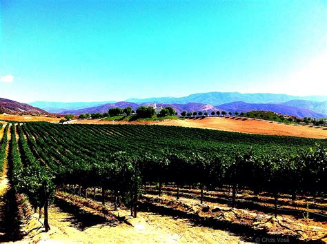 wine bureau temecula wine tour southern california s napa