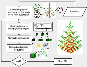 Project Digiplante The Equations Of Plant Growth And