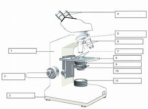 Microscope Drawing Worksheet At Paintingvalley Com