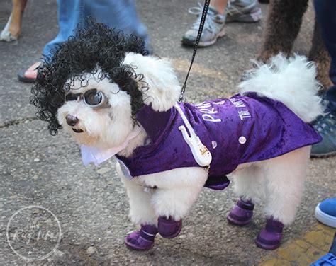 St. Louis Mardi Gras Beggin' Pet Parade 2017 (part 2