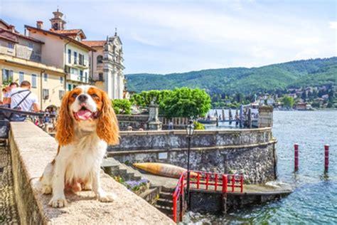 cing italien mit hund urlaub mit hund hunde fan de