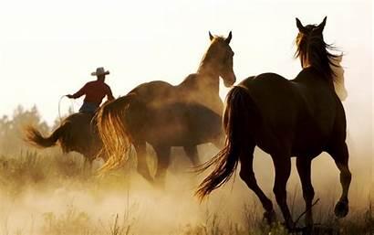Western Cowboy Backgrounds Romance