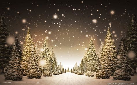 winter snow christmas trees landscape wallpapers free