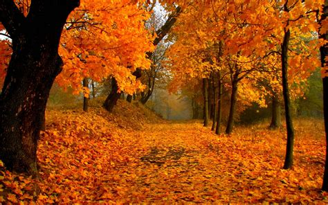 Fall Foliage Wallpapers  Wallpaper Cave