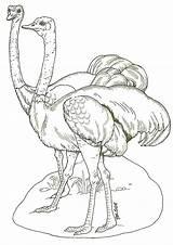 Coloring Pages Ostrich Ostriches Ark Noah Preschool Outline Printable Brett Jan Adult Bird Drawing Animal Drawings Kindergarten Jay Janbrett sketch template