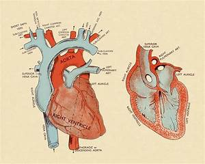 Transposition Of The Great Arteries  Overview And More