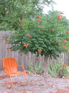 Gardening Outdoor Trumpet Vine