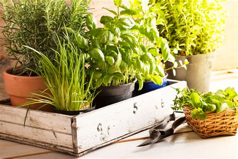 Herb Garden Indoor : Your Ultimate Guide To Growing Herbs Indoors-eatingwell