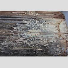 Holzwurm Bekämpfen  7 Tipps Die Sofort Wirken