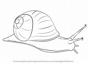 Learn How to Draw a Snail (Snails) Step by Step : Drawing ...